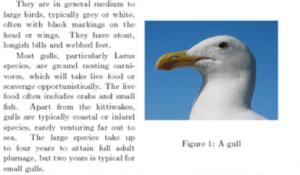 外贸网站图片周边使用LSI关键词提升图片相关性-外贸老船长